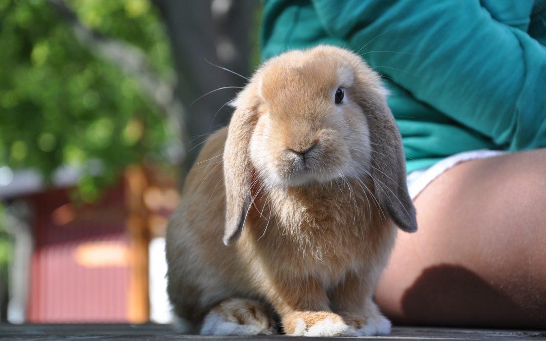 Kaniner som mumsar bajs