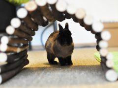 Inredning för en lycklig kanin