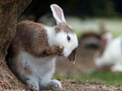 Skötselråd Kanin