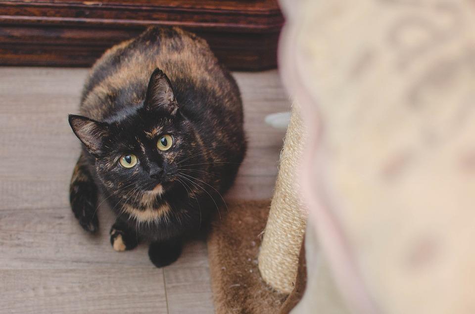 Kattliv med klös