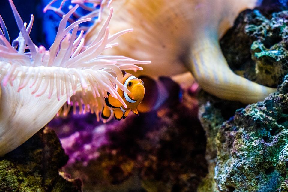 Hitta Nemo kan bli en livsstil