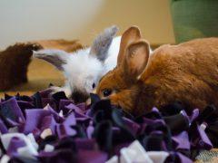Berika kaninens måltider