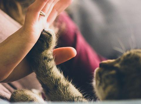 Träna din katt, minska stress