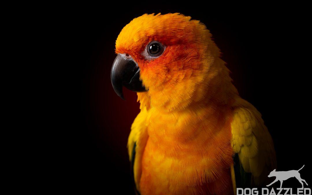 Vilken fågel är rätt för mig?