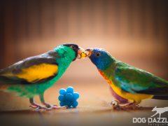 Hur man tämjer en fågel