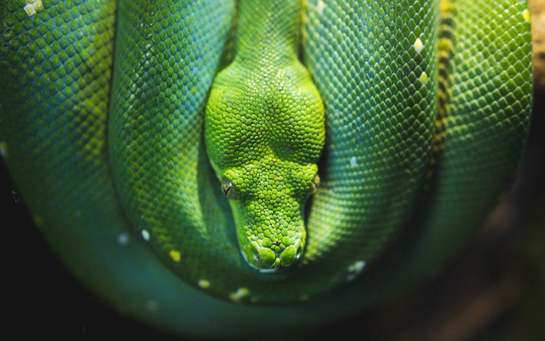 10 saker du inte visste om ormar
