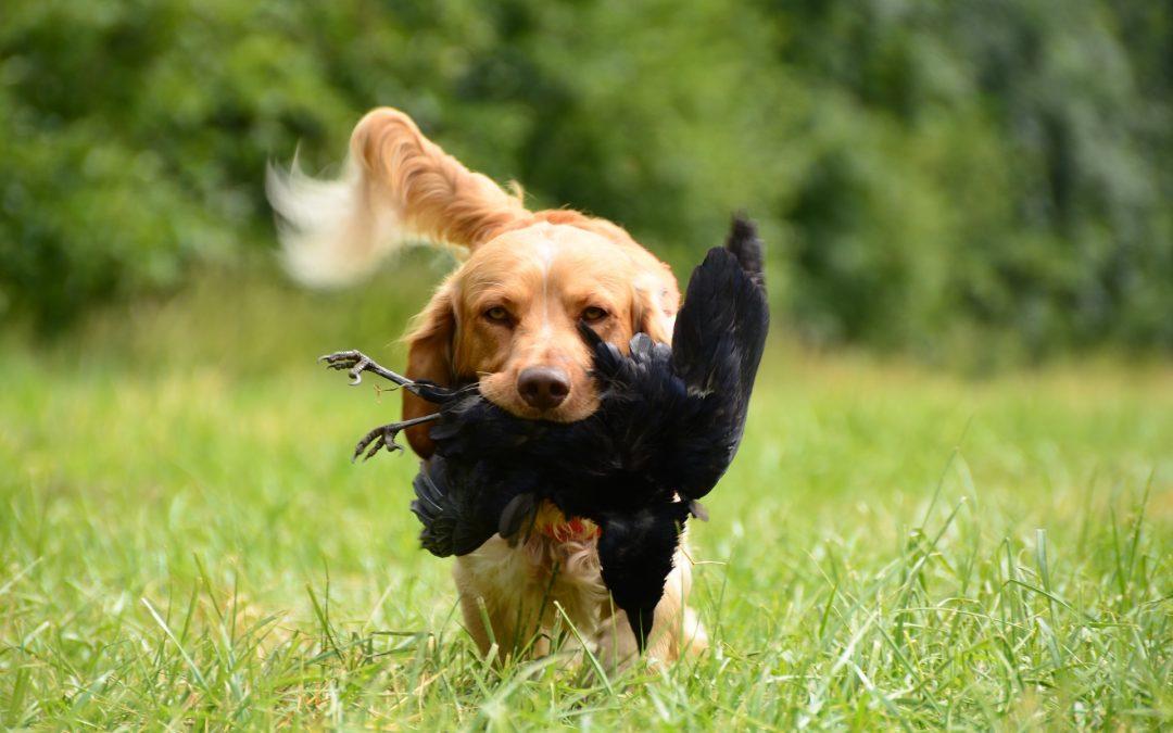 Tre potentiellt farliga arbeten för hundar