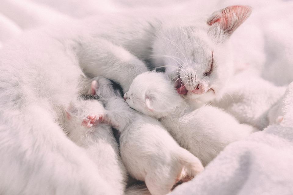 Därför är kattungens första tid viktig